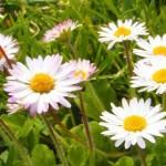 Nomi per bambini ispirati alla primavera