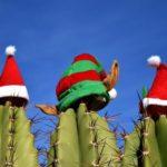 Piante e fiori natalizi da regalare a Natale a chi non ha il pollice verde