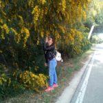 Festa delle Donne: 8 Marzo e la scelta della mimosa