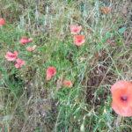 Erbe Selvatiche del Montalbano